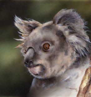 Old Man Koala (Large)
