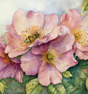 Jennifers Rose (Large)